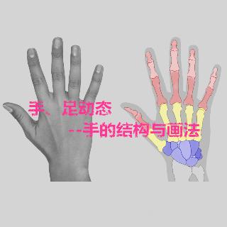 足动态--手的结构与画法