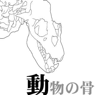 动物骨骼线稿素材