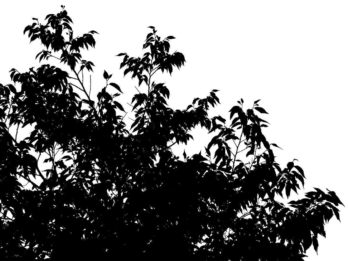 花草树木素材 - 优动漫