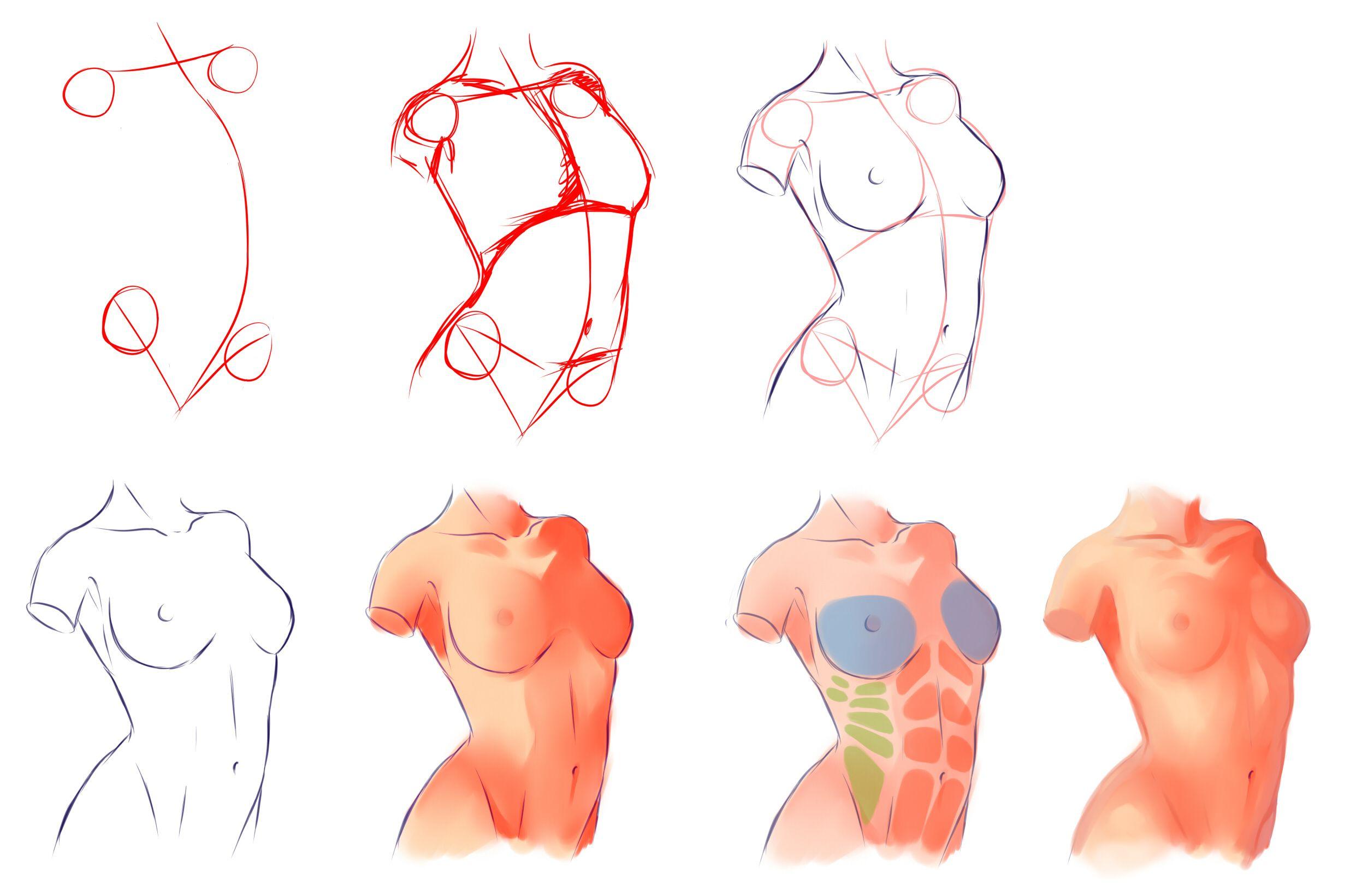 人体结构参考合辑 - 优动漫