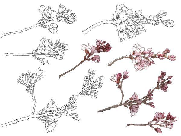 一朵樱花简笔画分步骤图解