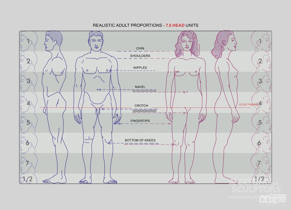 脚踝等都是人体结构中重要的部位