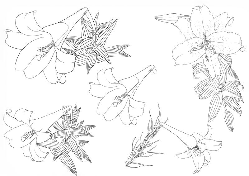 花朵线稿png