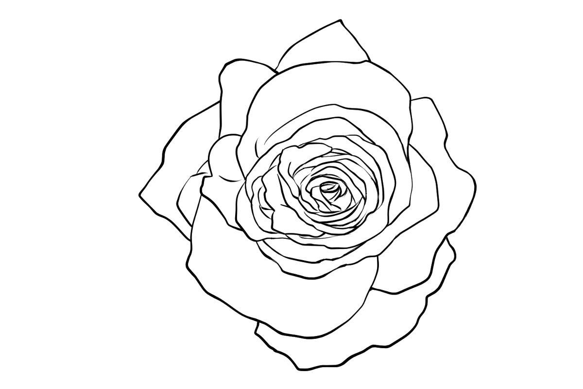画蔷薇简笔画的步骤
