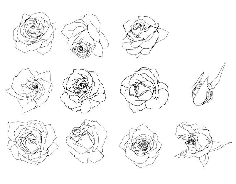 蔷薇花纹矢量图