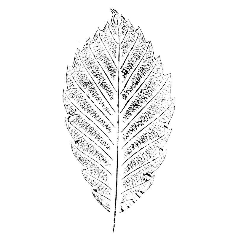 树叶手绘图片简笔画