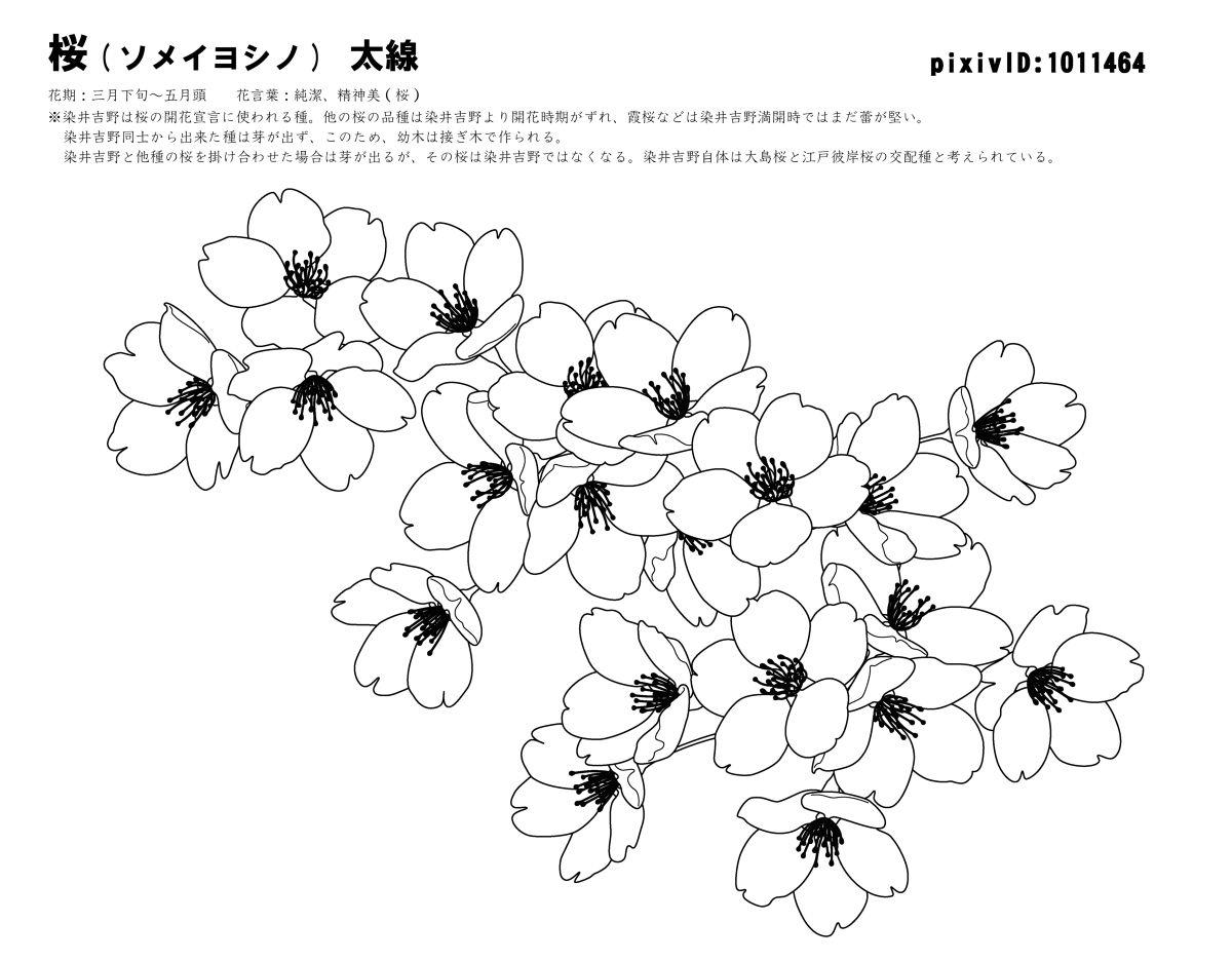 手绘墙素材 樱花树 樱花_乐乐简笔画