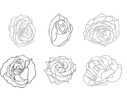 蔷薇花的画法步骤