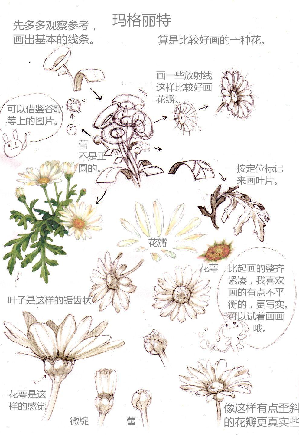 蔷薇的画法教程