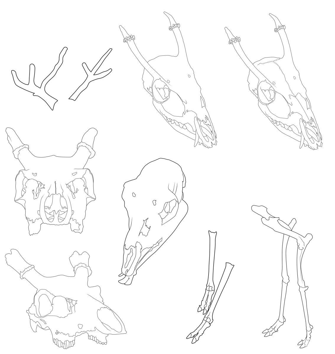 动物骨骼线稿素材 - 优动漫