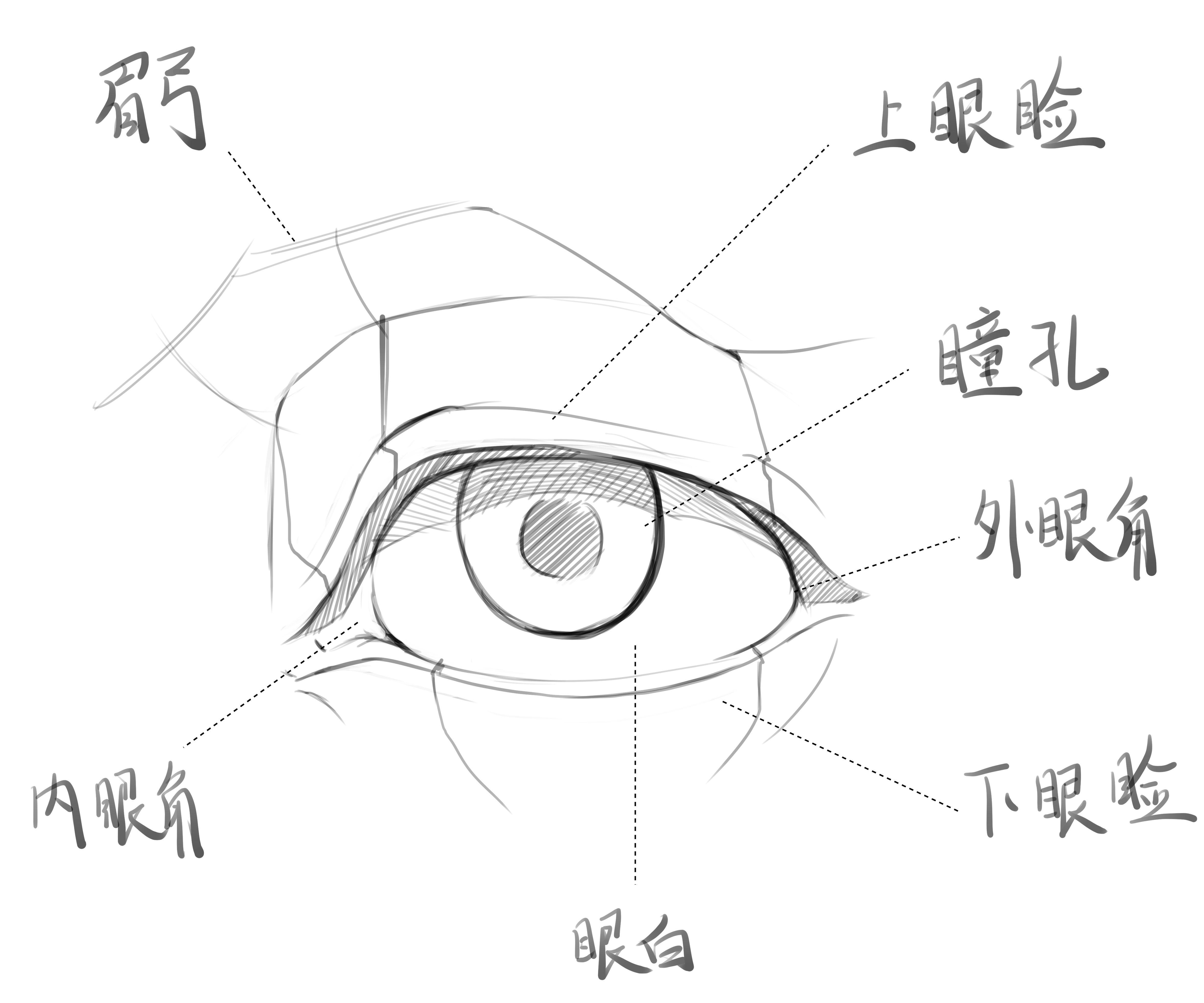 第3课 眼睛