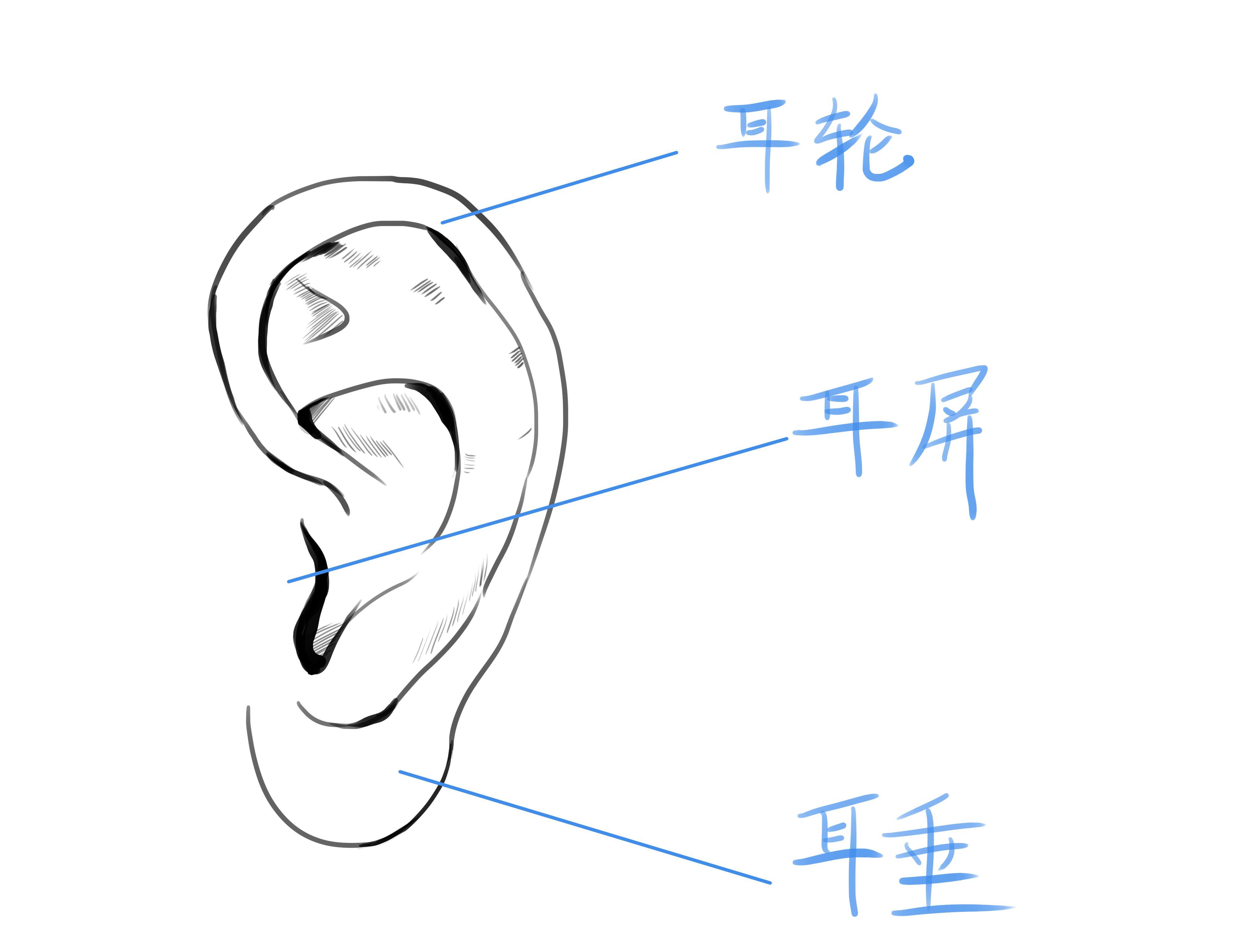 漫画里人物的耳朵通常被简化