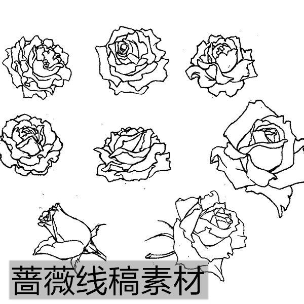 画蔷薇花的步骤带图