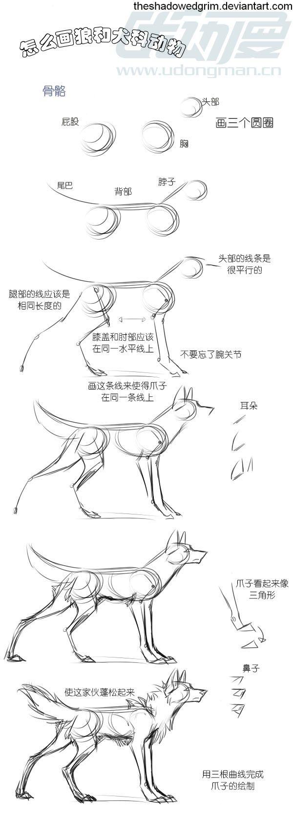 画狼的步骤图片