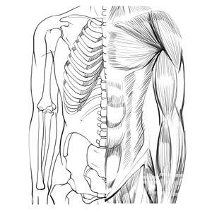 动漫头部画法_第20课 了解骨骼·肌肉结构 - 优动漫 动漫创作支援平台