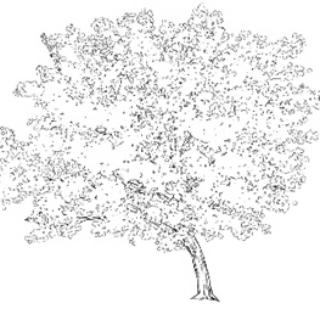 远景樱花树 - 优动漫 动漫创作支援平台
