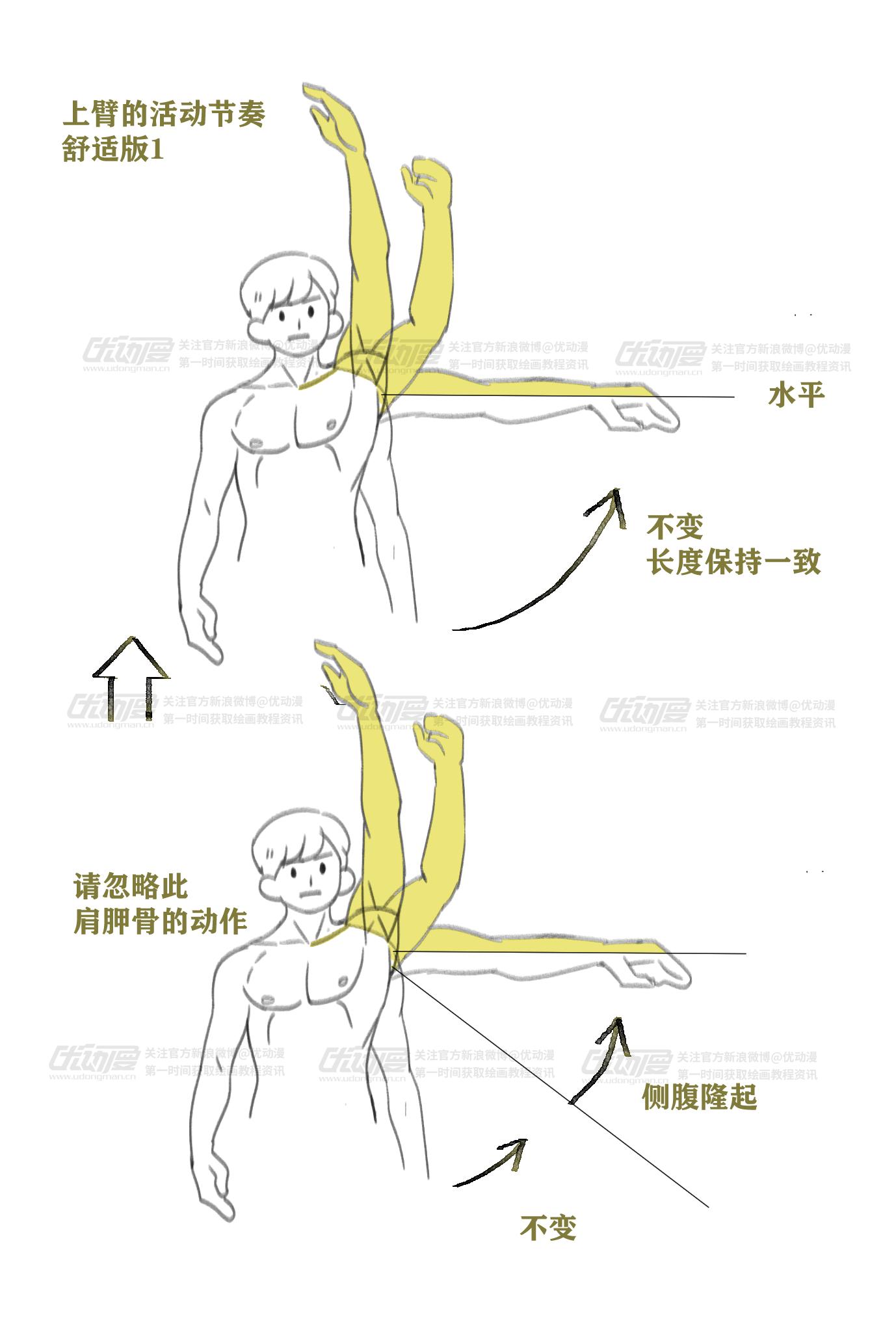 肌肉的绘制教程2.png