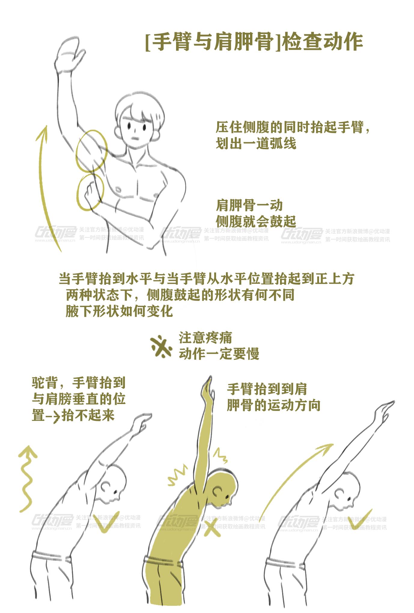 肌肉的绘制教程4.png